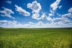 Pszeniczny pole przeciw niebieskiemu niebu z białymi chmurami Rolnictwo scen Zdjęcie Royalty Free