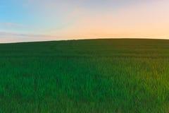 Pszeniczny pole przy świtem Zdjęcie Royalty Free