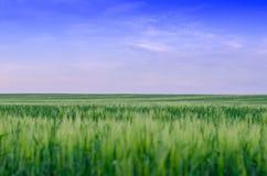 Pszeniczny pole, Ukraina obrazy stock