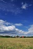 Pszeniczny pole w Brandenburg, Niemcy b??kitne niebo Fotografia Stock