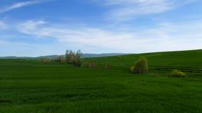 Pszeniczny pole w wio?nie, pszeniczna ro?lina zaczyna? rosn??, kontynentalny klimat i banatki kultywacja, zbiory