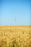 Pszeniczny pole z niebieskim niebem i elektrycznym słupem Fotografia Royalty Free