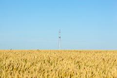 Pszeniczny pole z niebieskim niebem i elektrycznym słupem Obraz Stock