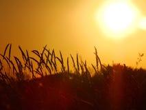 Pszeniczny wschód słońca Obrazy Royalty Free