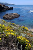 Pt Lobos. Carmel Calif royalty free stock images