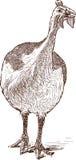 ptactwo gwinea royalty ilustracja