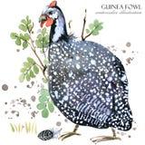 ptactwo gwinea dzikiej ptasiej akwareli bezszwowy wzór royalty ilustracja