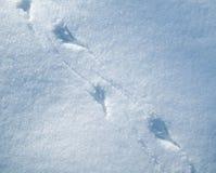 Ptaków ślada w śniegu Zdjęcie Stock