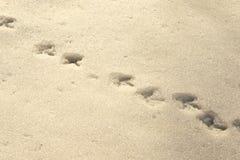 Ptaków ślada w śniegu Zdjęcia Royalty Free