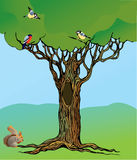 ptaków czarodziejski dąb zakorzeniający wiewiórczy bajki drzewo Zdjęcia Stock