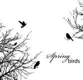 ptaków drzewa Zdjęcia Royalty Free