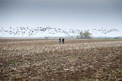 ptaków emek hahula Israel migracja Zdjęcia Royalty Free
