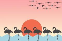 Ptaków flamingi Stoi i lata przed słońcem nad dennym jeziornym Ilustracyjnym tłem ilustracja wektor