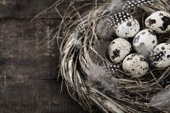 ptaków jajek gniazdeczko Obraz Stock