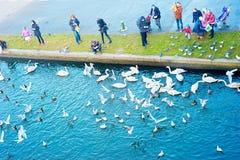 Ptaków karmić Obraz Stock