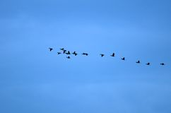 Ptaków Latać Zdjęcie Royalty Free