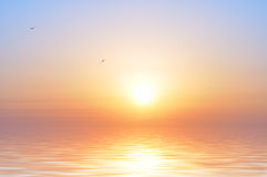 ptaków oceanu wschód słońca Fotografia Stock