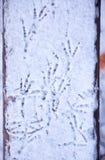 ptaków odcisk stopy Zdjęcie Royalty Free