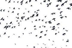ptaków target2879_1_ Zdjęcia Royalty Free