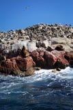 ptaków wyspy lwów paracas Peru morze Zdjęcia Stock