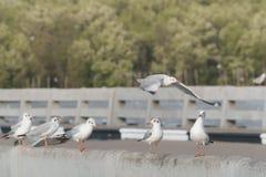 Ptak żerdź na mosta poręczu Zdjęcie Stock