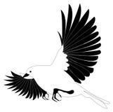 ptak ilustracji