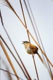 Ptak Fotografia Royalty Free