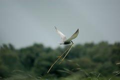 ptak Obraz Stock