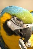 ptak, Zdjęcia Royalty Free