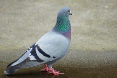 Ptak 21 Zdjęcie Stock