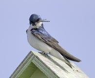 ptak łapie komarnicy komarnica dwa Fotografia Stock