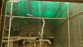 Ptak arena Fotografia Royalty Free
