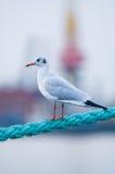 ptak arkana Obrazy Royalty Free