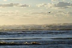 ptak chmurnieje ocean Fotografia Stock