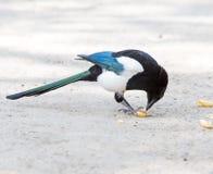 Ptak czterdzieści obrazy stock
