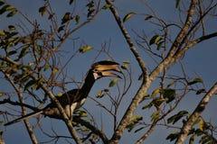 Ptak & drzewo obrazy royalty free