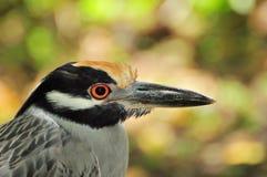 ptak dziki Obraz Stock