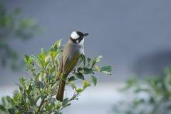 ptak dziki obrazy stock
