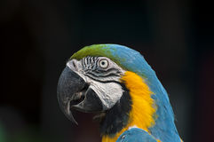 Ptak głowy strzał zdjęcia royalty free