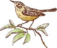 ptak gałąź Zdjęcia Royalty Free