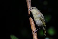 ptak gałąź umieszczał zdjęcia royalty free