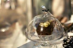ptak gniazdeczko ochraniający s Obraz Royalty Free