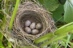 ptak gniazdowy s Obrazy Stock