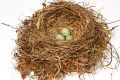 ptak gniazdowy s Fotografia Royalty Free