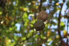 ptak gniazdowy s obraz stock