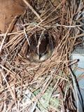 ptak gniazdowy s Fotografia Stock
