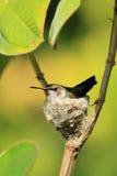 Ptak gniazduje w drzewie Zdjęcie Stock
