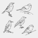Ptak grawerujący styl Znaczek, foka Prosty nakreślenie royalty ilustracja