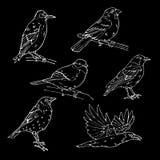 Ptak grawerujący styl Znaczek, foka Prosty nakreślenie ilustracja wektor