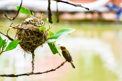 Ptak x27 i Bird&; s gniazdeczko obraz royalty free